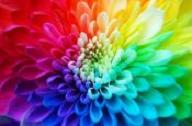 Color Psychology  Discover the meanings behind colors