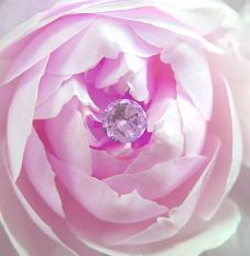 Choosing Pink For Your Wedding Color Shows You Are Loving Kind Generous And Sensitive To The Needs Of Others Friendly Roachable With A