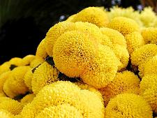 variations of the color yellow - Pictures Of The Color Yellow